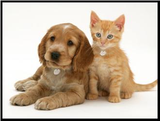 puppy-and-kitten-medallion
